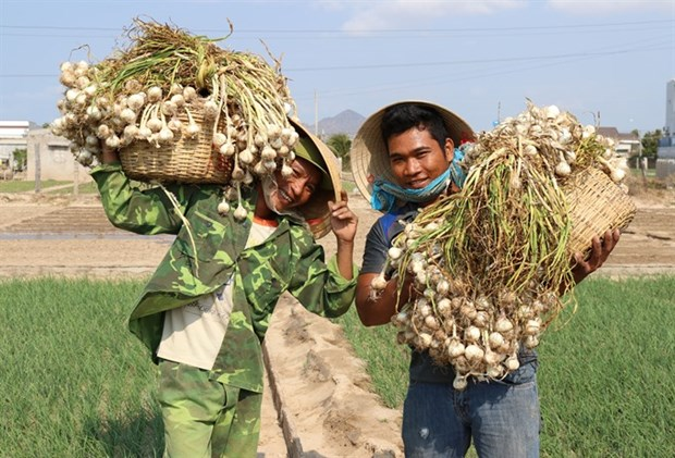Intellectual property rights for Vietnam's farm produce discussed hinh anh 1