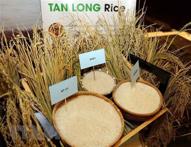 Vietnam's rice exports hit 5.2 million tonnes in ten months hinh anh 1