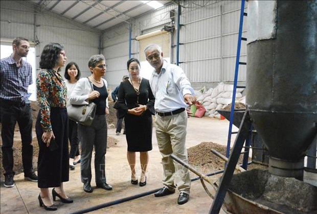 Pyrolysis technology improves coffee quality hinh anh 1