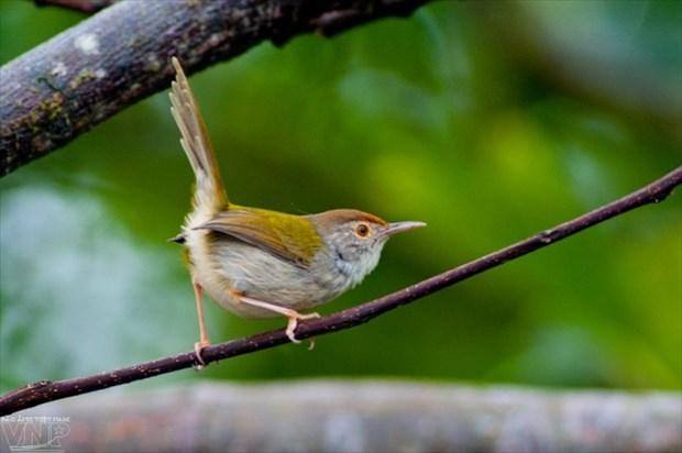 Bai Tu Long National Park conserves rich biodiversity values hinh anh 1