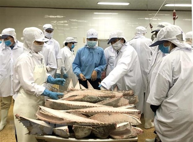 VASEP talks about EP fisheries committee's IUU fact-finding tour hinh anh 1
