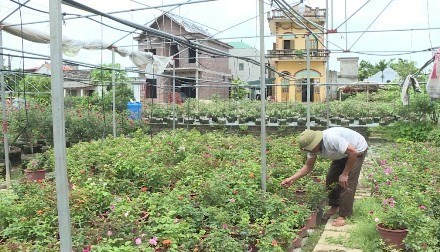 Ninh Binh province's farms go high-tech hinh anh 1