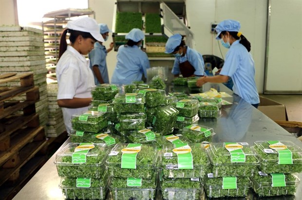 Agriculture sector targets 3 pct annual growth by 2020 hinh anh 1