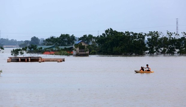 Measures to deal with Mekong Delta flood discussed hinh anh 1
