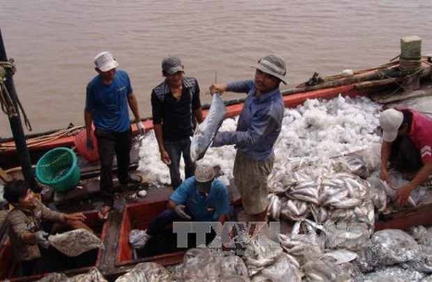 Seafood byproducts add value to fishery industry hinh anh 1