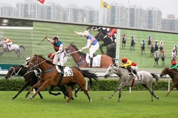 Hanoi to build 500 million USD horse racing track hinh anh 1