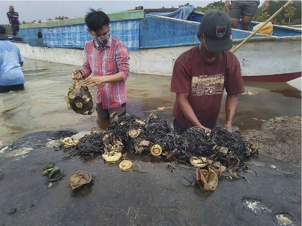 Dead sperm whale in Indonesia found with 6kg of plastic in its stomach hinh anh 1