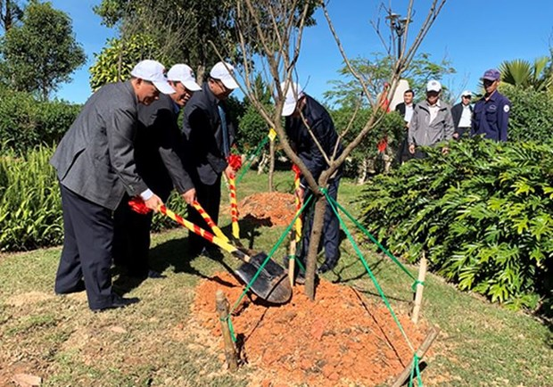 Japanese cherry trees planted in Da Lat city hinh anh 1