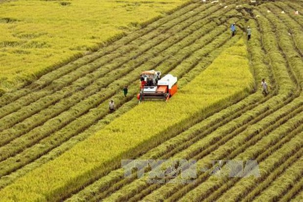 Agricultural sector needs more locally made machinery hinh anh 1