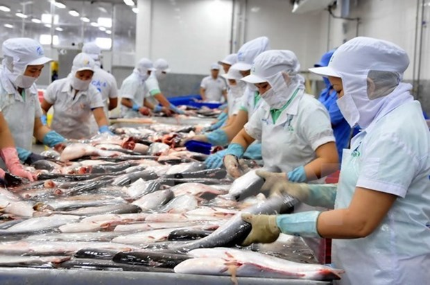 An Giang enjoys bumper tra fish production hinh anh 1