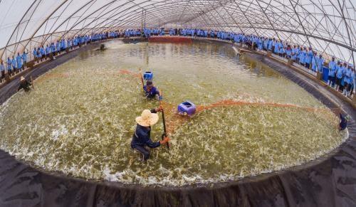 First breeding shrimp farm in Vietnam meets OIE standards hinh anh 1