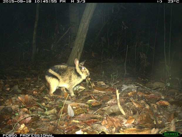 First insight into the ecology of an elusive and threatened rabbit hinh anh 1