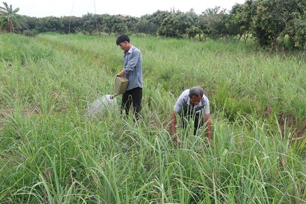 Tien Giang adopts new farming models amid climate change hinh anh 1