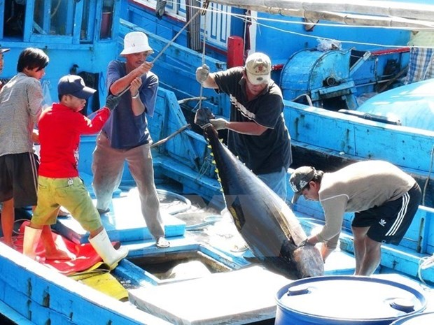 Sharp rise in tuna exports to Israel hinh anh 1