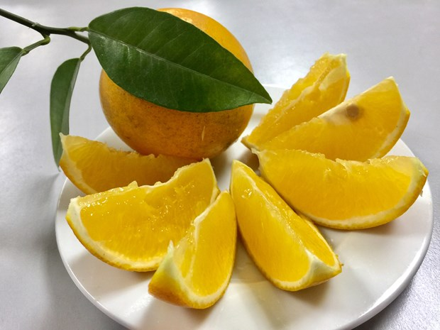 Cao Phong orange to be served on board Vietnam Airlines flights hinh anh 1