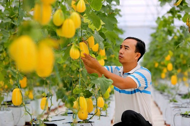 Centre founded to support cooperative development hinh anh 1