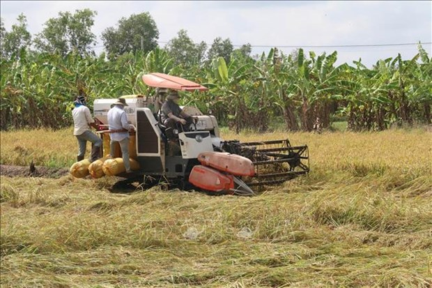 Vietnam's agricultural sector records progress hinh anh 1