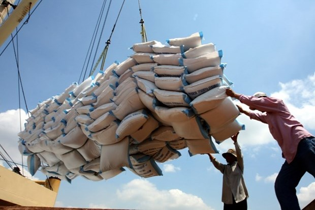 Rice export shows positive signals hinh anh 1