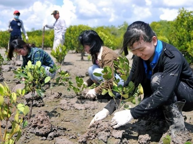 Tree planting festival on lunar New Year occasion launched hinh anh 1
