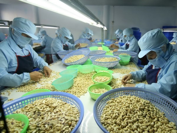 Conference looks to improve cashew processing quality hinh anh 1