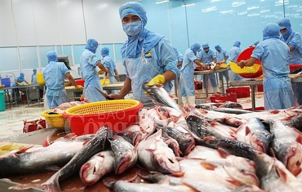 Vietnam's tra fish exports exceed 2 billion USD for first time hinh anh 1