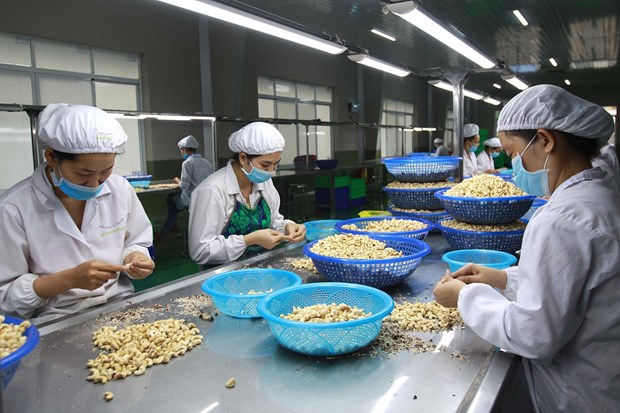 """Processors gain right to label """"Binh Phuoc"""" cashew products hinh anh 1"""