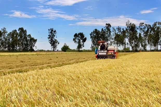 Experts make proposals towards sustainable agricultural production hinh anh 1