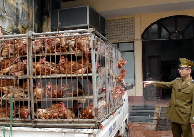 Ministry asks for concerted efforts to prevent poultry smuggling hinh anh 1