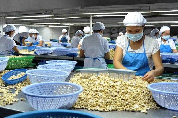 Local cashew industry to face challenges next year hinh anh 1
