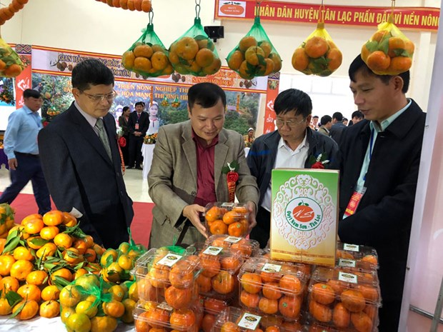 Tangerine variety in Hoa Binh granted collective trademark hinh anh 1