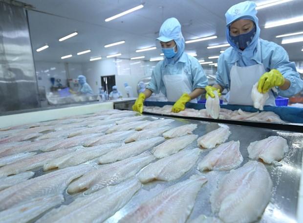 Tra fish exports surge to set new record hinh anh 1