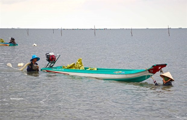 Fishermen in Ca Mau help authorities regenerate marine resources hinh anh 1