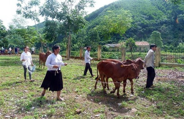 Number for poor households on the rise in ethnic minority areas: official hinh anh 1