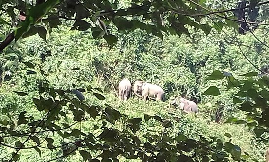 Quang Nam protects wild elephants hinh anh 1