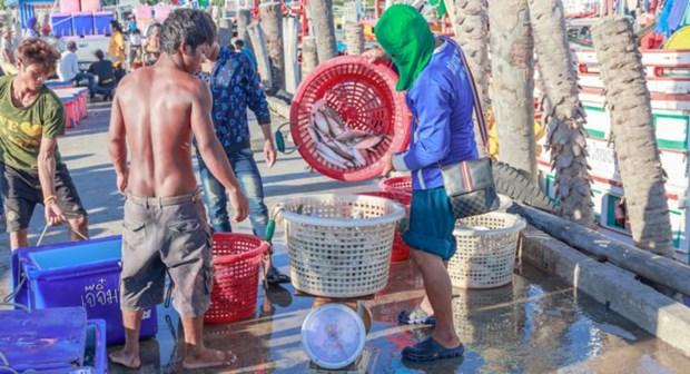 Thailand welcomes EU decision to lift warning on illegal fishing hinh anh 1