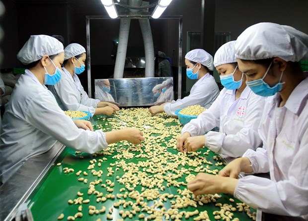 Cashew sector seeks ways to navigate through difficulties hinh anh 1