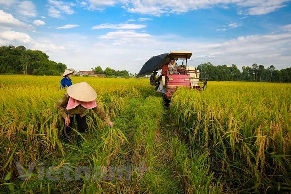 Crop cultivation sector targets 21 bln USD in export this year hinh anh 1