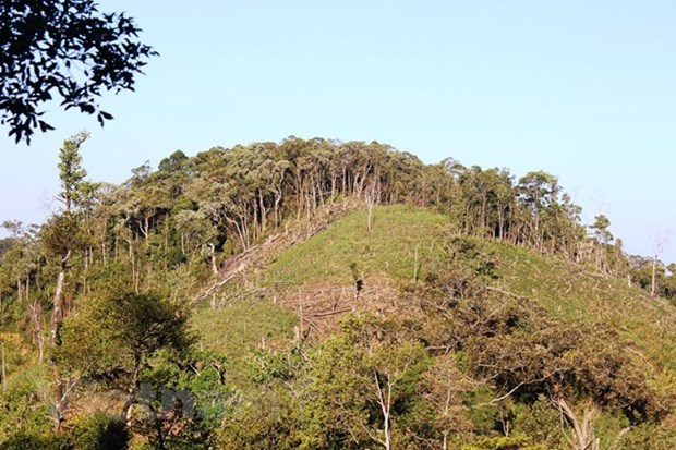 100,000ha of forest to be under sustainable management each year hinh anh 1