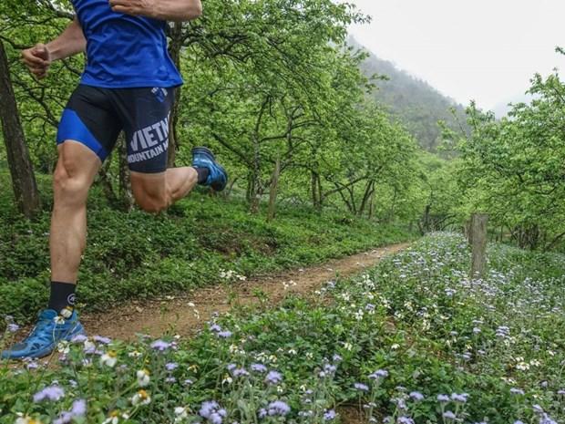 Vietnam Trail Marathon in Moc Chau to draw 1,900 runners hinh anh 1