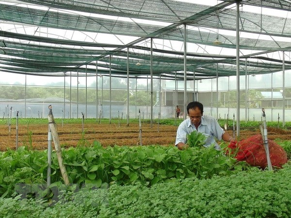 ADB assists high-tech agriculture development in Can Tho city hinh anh 1