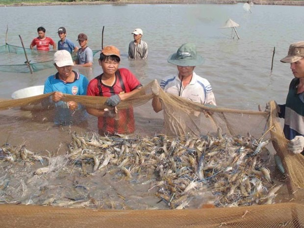 Mekong Delta aims for high-quality agriculture in 2019 hinh anh 1