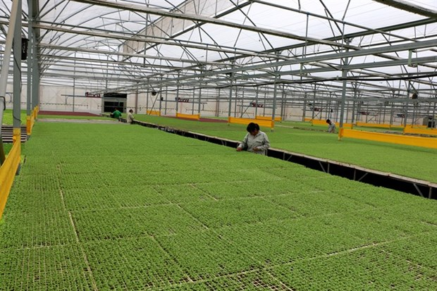Agriculture sector seeks solutions for sustainable development hinh anh 1