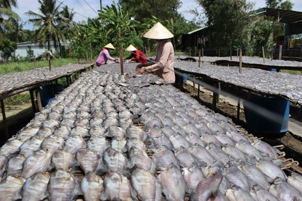 Mekong Delta dried fish making villages busy with production hinh anh 1