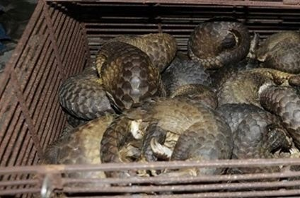 Illegal wild animal trading ring busted in Ha Tinh province hinh anh 1