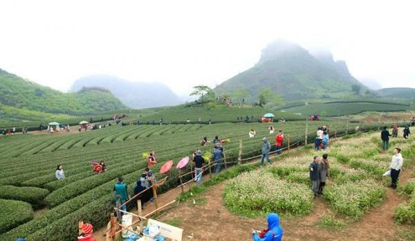 Planning scheme for Moc Chau national tourist site approved hinh anh 1
