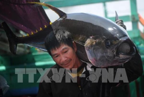 Tuna exports predicted to flourish in 2019 hinh anh 1