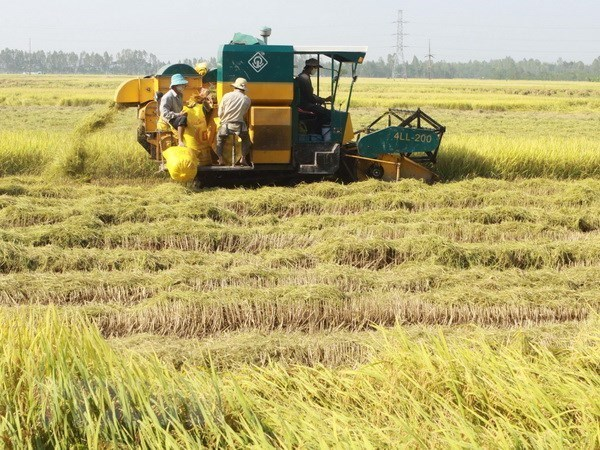 Vietnamese rice makes name in world market hinh anh 1
