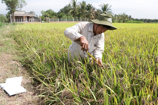 No degree, no problem for this rice innovator hinh anh 1