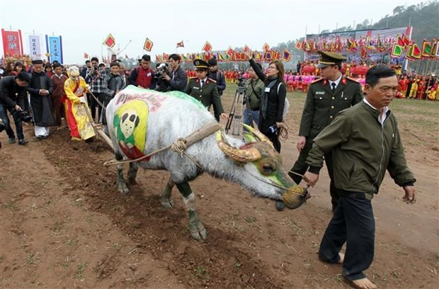 Painting contest held for buffaloes joining ploughing festival in Ha Nam hinh anh 1