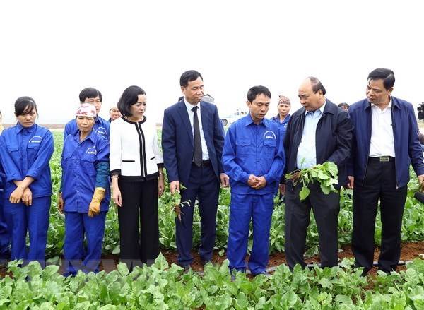 PM calls for application of technology in agricultural production hinh anh 1